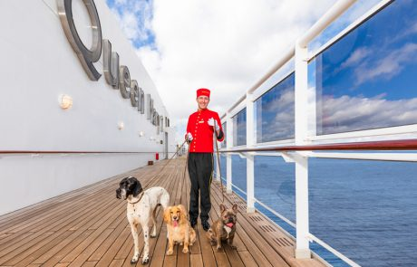 מדיניות חברות השיט בנושא חיות מחמד באניות קרוזים