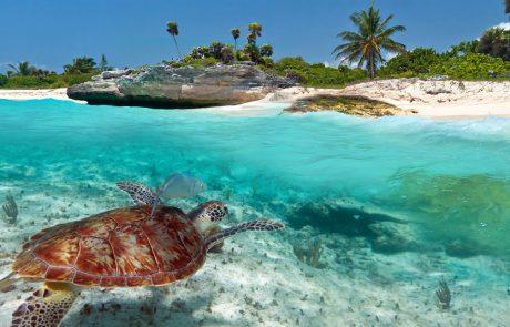 שייט בקריביים: בין ימי ים לסיורי חוף