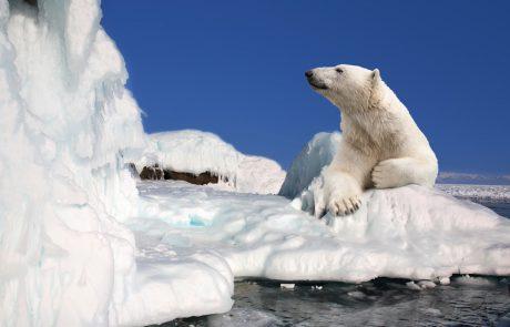 דוב קוטב נורה ומאבטח נפצע בספיטסברגן נורבגיה